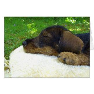 Bebé dulce - perrito lindo del Dachshund Tarjeta De Felicitación