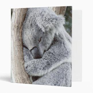 bebé durmiente de la koala