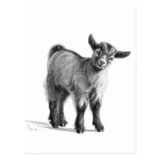 Bebé G097 de la cabra Postal