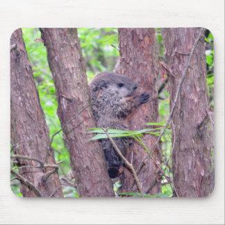 Bebé Groundhog que cuelga encendido Tapetes De Ratones