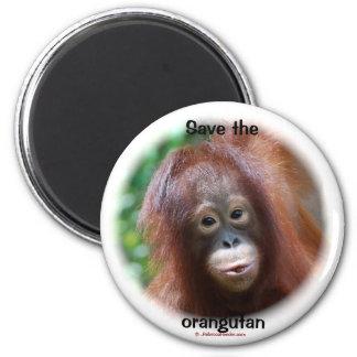 Bebé hermoso del orangután iman de frigorífico