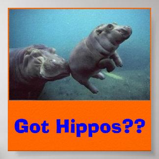 ¿bebé-hipopótamo, conseguido hipopótamos?? póster