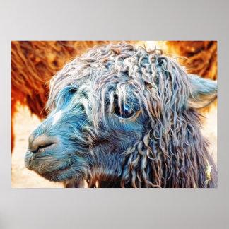 Bebé lindo de la alpaca en azul póster
