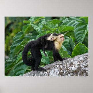 Bebé que lleva del mono adulto del capuchón en su