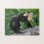 Bebé que lleva del mono adulto del capuchón en su  rompecabeza