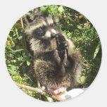 Bebé rescatado y rehabilitado del mapache etiquetas