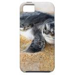bebé-tortuga. caso del iphone iPhone 5 Case-Mate cárcasa