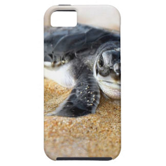 bebé-tortuga. caso del iphone iPhone 5 funda