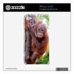 Bebé Uttuh de la fauna iPhone 4S Calcomanía
