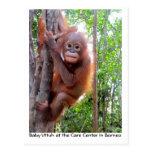 Bebé Uttuh del orangután en selva tropical Postal
