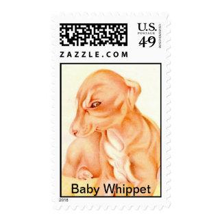 Bebé Whippet - SELLOS