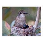 Bebés 2 del colibrí tarjeta postal