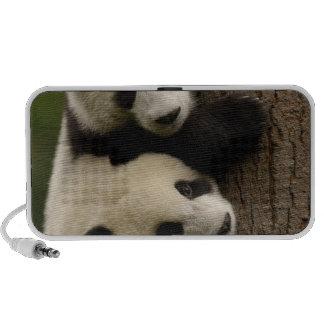 Bebés de la panda gigante (melanoleuca del Ailurop Altavoces