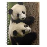 Bebés de la panda gigante (melanoleuca del Ailurop Libros De Apuntes Con Espiral