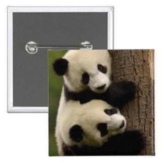Bebés de la panda gigante (melanoleuca del Ailurop Pin Cuadrada 5 Cm