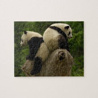 Bebés de la panda gigante (melanoleuca del Ailurop Puzzle