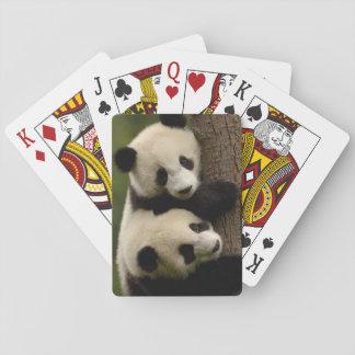 Bebés de la panda gigante (melanoleuca del barajas de cartas