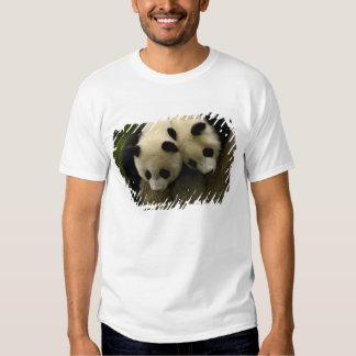 Bebés de la panda gigante (melanoleuca del camisas