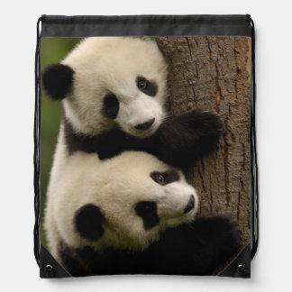 Bebés de la panda gigante (melanoleuca del mochila