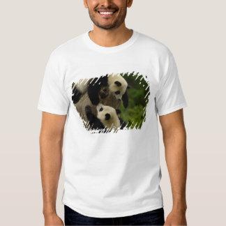 Bebés de la panda gigante (melanoleuca del playeras