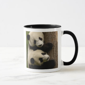 Bebés de la panda gigante (melanoleuca del taza