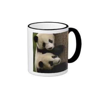 Bebés de la panda gigante (melanoleuca del taza a dos colores