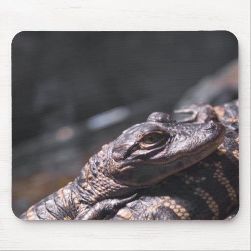 Bebés del cocodrilo americano mousepads