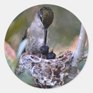 Bebés del colibrí pegatina redonda