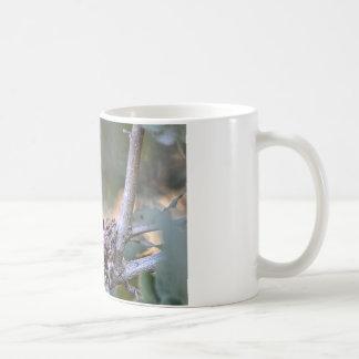Bebés del colibrí taza