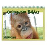 Bebés del orangután calendario