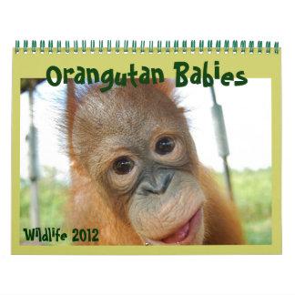 Bebés del orangután de la fauna calendario