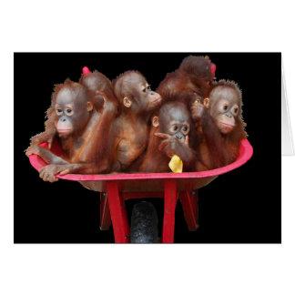 Bebés del orangután de las estupideces tarjeta pequeña