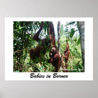 Bebés en Borneo Póster