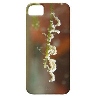Bebés enanos del Seahorse iPhone 5 Case-Mate Cobertura
