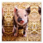 Bebés lindos de los animales del campo del fotografía