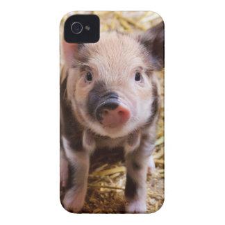 Bebés lindos del corral de los animales del campo iPhone 4 Case-Mate carcasa