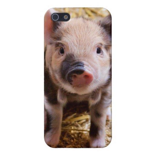 Bebés lindos del corral de los animales del campo  iPhone 5 carcasa