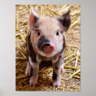 Bebés lindos del corral de los animales del campo póster