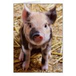 Bebés lindos del corral de los animales del campo tarjeta de felicitación