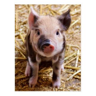 Bebés lindos del corral de los animales del campo tarjetas postales