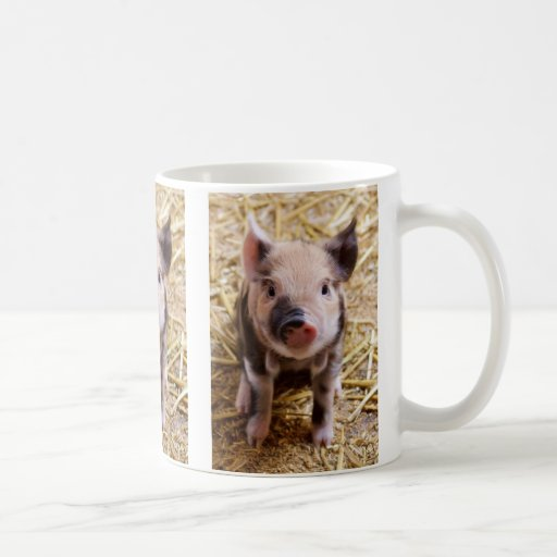Bebés lindos del corral de los animales del campo  taza de café