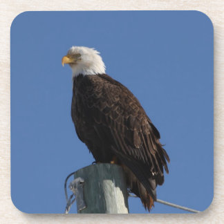 BEBS Bald Eagle Blue Sky Beverage Coaster