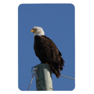 BEBS Bald Eagle Blue Sky Magnet