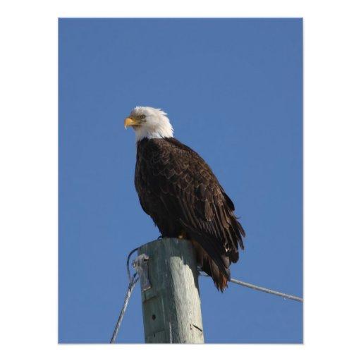 BEBS Bald Eagle Blue Sky Photo Print