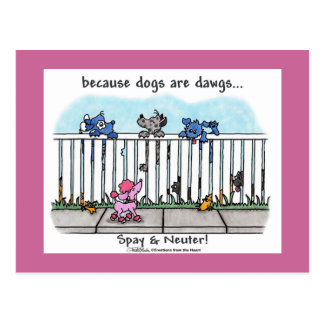 Because Dogs are Dawgs Postcard