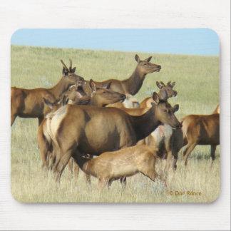 Becerro de alimentación de los alces de la vaca E0 Tapetes De Raton