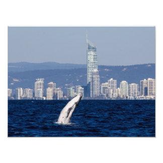 Becerro de la ballena jorobada que viola paraíso cojinete