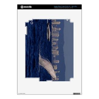 Becerro de la ballena jorobada que viola paraíso iPad 3 skin