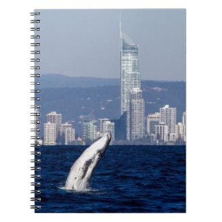 Becerro de la ballena jorobada que viola paraíso libretas espirales