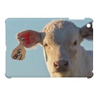Becerro de la carne de vaca de Charolaise cerca de
